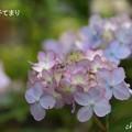 写真: 鎌倉長谷-142