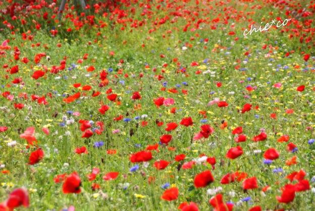 花菜ガーデン-015