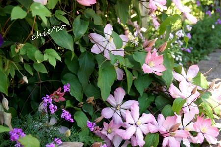 花菜ガーデン-191