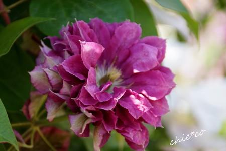 花菜ガーデン-196