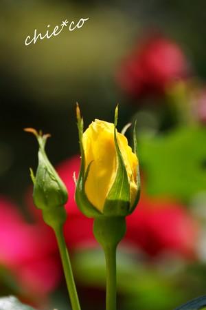 花菜ガーデン-087