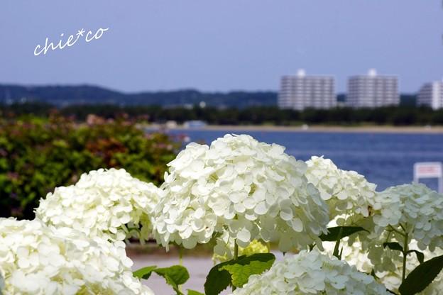 八景島-026