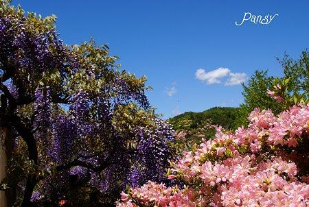 初夏の花風景・・