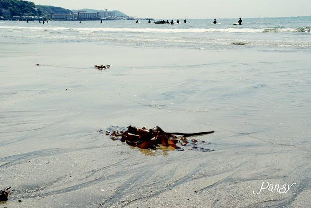 波の置き土産・・ 渚にて・・6