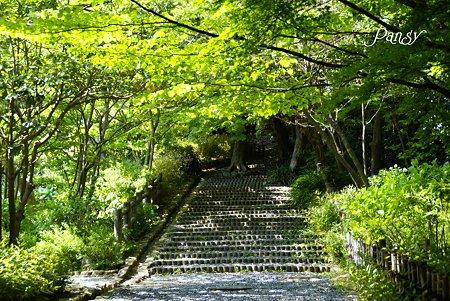 新緑の階段・・ 初夏の鎌倉文学館にて・・3