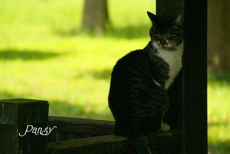 ここがお気に入りなの・・ 久良岐公園の猫さん
