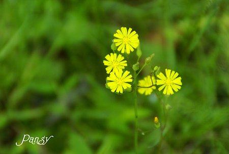 黄色の風車~♪