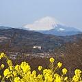写真: 富士・・♪