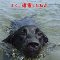 Photos: 花初泳ぎ6