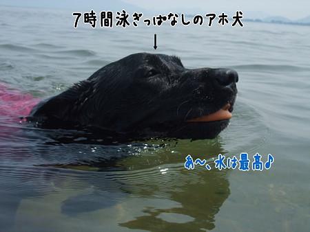 水キチアホ犬