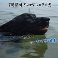 Photos: 水キチアホ犬
