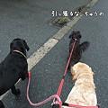 Photos: ひっぱる~