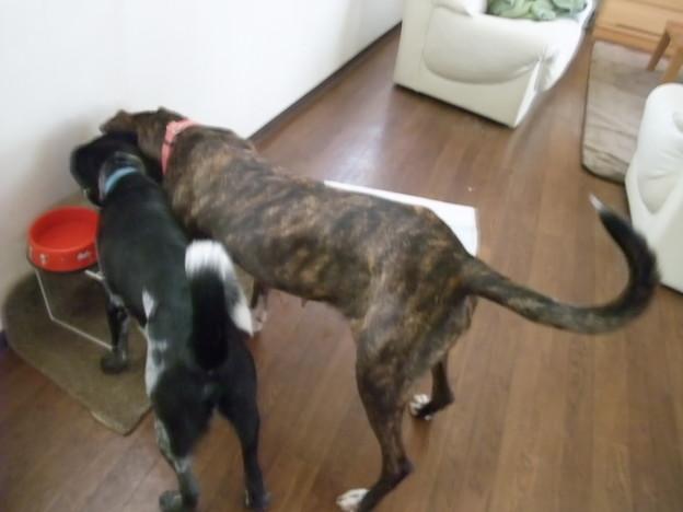 Photos: 保護犬同士仲良し♪