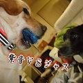 Photos: 紫音VSジャス