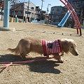 Photos: くるみ 103