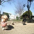Photos: くるみ 377