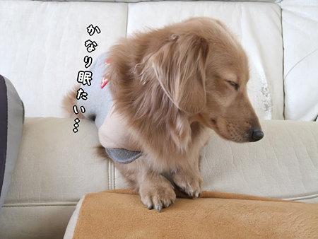 かなり眠たい…