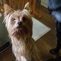 Photos: 保護犬カノン(引き出し直後)