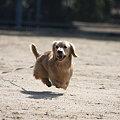 Photos: 飛行犬