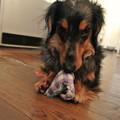 Photos: イノキューおもちゃで遊び中