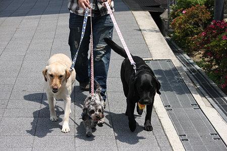 久々に我が子達だけの散歩です