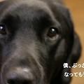 Photos: 男前台無しや~