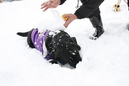 雪乗せ(大)