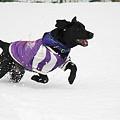 Photos: 雪~