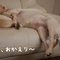 Photos: おかえり
