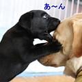 Photos: 顔噛み?!目潰し?!