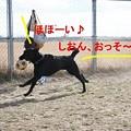 Photos: クズル嬢の勝ち!