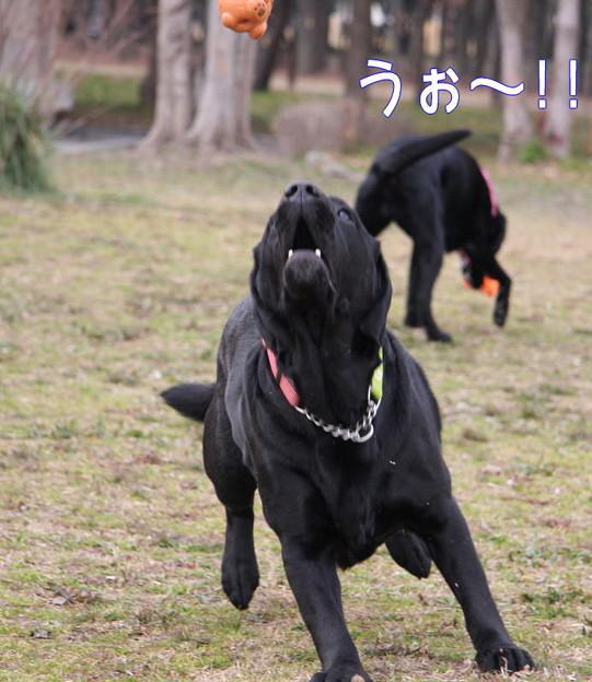 Photos: ボール遊び3