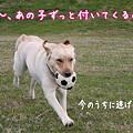 Photos: 逃げろ!