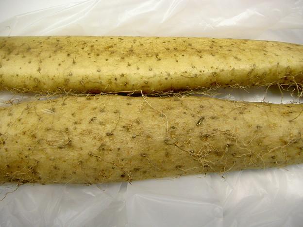 自然薯の表面