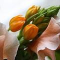 写真: 春の足音にみちびかれ