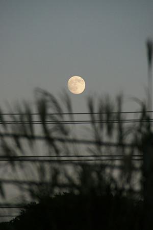 ススキと満月1013m