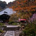 写真: 紅葉に染まる海蔵寺。(11/9)