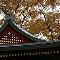 写真: 鶴岡八幡宮の紅葉1109s