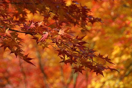 東福寺紅葉紅葉1129b