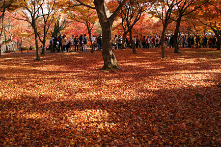 東福寺ジュータン紅葉1129m