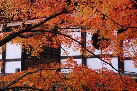東福寺紅葉と丸窓1129n
