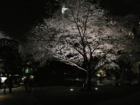 夜桜一本0327te