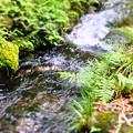 Photos: 丸池の湧水 近くの小川
