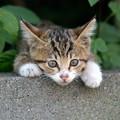 Photos: ちび猫