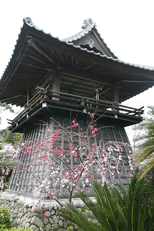 能満寺(吉田町) - 2