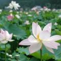 花はすの郷