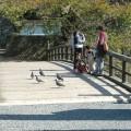 Photos: 福井城本丸跡・御廊下橋