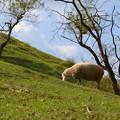 写真: 牧場