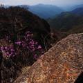 ツツジと岩の山頂