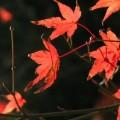 Photos: 秋の忘れ物 014